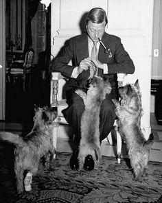 The Duke of Windsor with his Cairn terriers. Photos by William Vandivert
