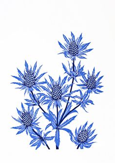 A limited edition screen print of the beautiful wildflower - sea holly. Created from two hand drawn stencils and hand printed in cobalt blue(with a touch of purple) and dark blue/grey water based inks on 300gsm Fabriano 5 paper.
