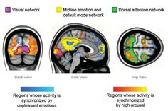 Researchers say experiencing strong emotions synchronizes brain activity across individuals