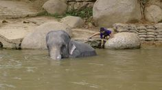 Elephant Camp and Babmoo Rafting Chiang Mai Thailand by vtpoly