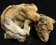 Mummified dogs, among other relics unearthed in Egypt   TopNews