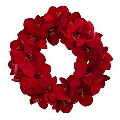"22in Amaryllis Wreath - A bold piece of decor, no matter the season or occasion, this wonderful wreath has no equal. With full, open Amaryllis blooms in a 22"" diameter circle, this wreath makes a statement no matter where you display it. The best part is, it'll never dry out or need care, so it will great great year after year. Ideal for both home or office, it makes an interesting gift as well. Number of Trunks: NA Number of Flowers: NA Number of Leaves: NA Pot Size: NA Color: NA Product…"