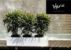 FURNITURE STYLE: modernidad y elegancia para ambientes y estancias especiales.