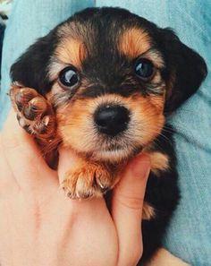 Look at this cutie pie!! -AriH