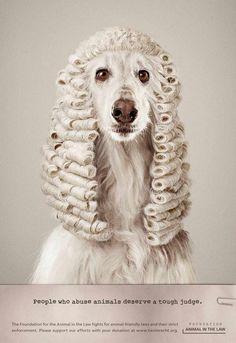 Jueces animales. Anuncio de Foundation for the Animal in the Law
