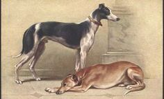 Greyhound Postcard, 1910