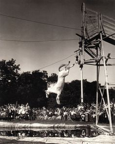Circus Horses, Come And See, Wonderful Horses www.horse Circus Show Horses All The Pretty Horses, Beautiful Horses, Old Pictures, Old Photos, Horse Diving, Circus Photography, Circus Performers, Vintage Circus, Vintage Horse