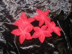 5-Petal MINI Red Flowers