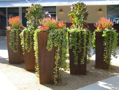 Now that is a succulent statement! Succulents - including trailing succulents - in Corten steel planters.