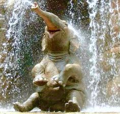 Image result for COOLING OFF ANIMALS