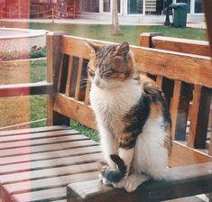 #izmir #smyrna #cat #kedi #vsco #vscocam #afterlight #dsi