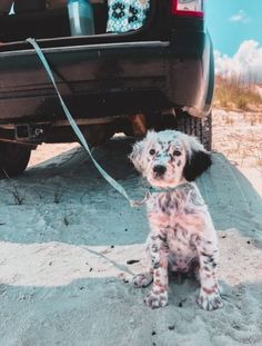 Awesome cute dogs tips are offered on our web pages. Read more and you wont be sorry you did. Cute Little Animals, Cute Funny Animals, Cute Dogs And Puppies, Doggies, Puppies Tips, Cute Animal Pictures, Cute Creatures, Mans Best Friend, Animals And Pets