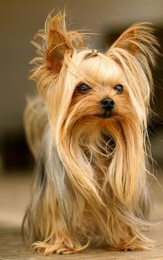 The Other Friends: 5 Most Popular Dog Breeds in the USA