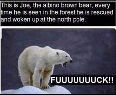 His is Joe, the albino brown bear, every ime he is seen in the forest he is rescued .nd woken up at the nonh pole, - iFunny :) Laugh Or Die, Laugh Out Loud, Have A Laugh, The Funny, Funny Cute, Hilarious, Best Funny Pictures, Funny Images, Animal Memes