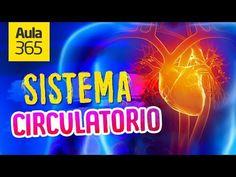 (4) ¿Cómo funciona el Sistema Circulatorio? | Videos Educativos para Niños - YouTube Guided Meditation, Deep Relaxation, Circulatory System, Youtube, Sleep, Neon Signs, Board, Amor, Frases