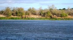 George II the Elephant and his friend on the island in the river Wildlife, Elephant, In This Moment, River, Island, Game, Venison, Rivers, Islands