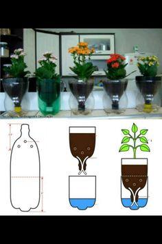 Bottle gardening