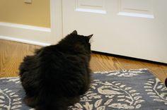 Thimbleanna: Kitties on the Hunt