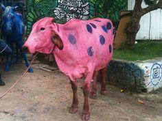 O Catraca Livre testemunhou o uso de uma vaca e um cavalo sendo usados para uma pegadinha televisiva. Veja fotos aqui.