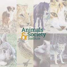 The Animals and Society Institute has a new logo and website! www.animalsandsociety.org  Facebook: www.facebook.com/AnimalsandSocietyInstitute Twitter: @Animals and Society Institute #asi #animalsandsociety #dog #cat #owl #bunny #monkey #wolf #horse #lion #animalrights #animalwelfare