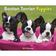 Boston Terrier Puppies Wall Calendar: What's black and white and cute all over? Boston Terrier puppies, of course! Twelve adorable full-color photographs embody all the charming traits of this enormously popular breed.  $13.99  http://calendars.com/Boston-Terriers/Boston-Terrier-Puppies-2013-Wall-Calendar/prod201300002995/?categoryId=cat10055=cat10055#