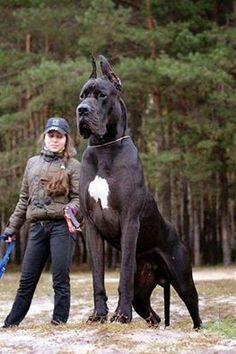 es un perro muy grande