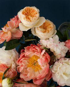 Peonies Art Print by Kari Herer #botanical #floral #etsy