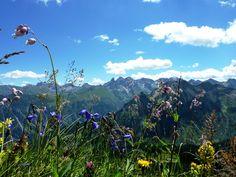 Bergblumenwiese am Fellhorn bei Oberstdorf.