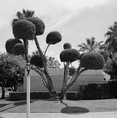 The tree from Dr Suess book/movie The Lorax