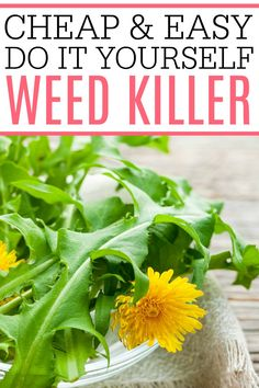 Tired of weeds? Try out this cheap & easy DIY weed killer. It's easy to make from stuff you already have at home. Say goodbye to weeds for good! #gardening #DIY # weedkiller