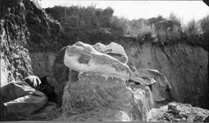 Fossil of Scelidotherium in plaster jacket | por The Field Museum Library