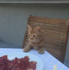 Cat and good food