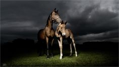 http://www.horse-photographer.co.uk/gallery/
