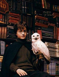 Harry Potter (Daniel Radcliffe) and Hedwig Harry Potter Tumblr, Harry James Potter, Hedwig Harry Potter, Young Harry Potter, Mundo Harry Potter, Theme Harry Potter, Harry Potter Pictures, Harry Potter Cast, Harry Potter Universal