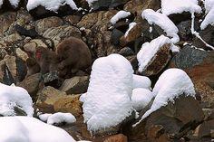 Animal Camouflage by Art Wolfe - monkeys