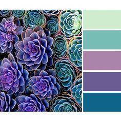 Color / Succulents color palette (green, purple, turquoise)