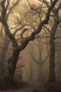 """""""A dark forest. A dark, creepy forest. A dark, creepy forest where scary animals were probably hiding. Tree Forest, Dark Forest, Foggy Forest, Misty Forest, Forest Art, Haunted Forest, Wild Forest, Magic Forest, Autumn Forest"""