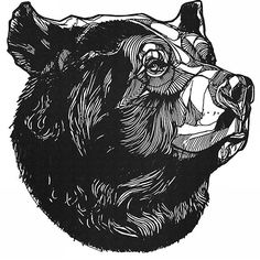 Grizzly bear free drawing patterns to trace Animal Sketches, Animal Drawings, Tattoo Drawings, Art Drawings, Urso Bear, Bear Sketch, Desenho Tattoo, Bear Art, Art Inspo