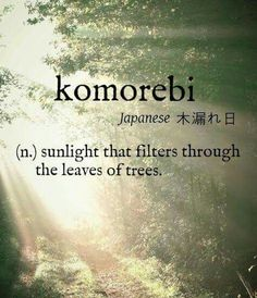 I couldn't think of one word to describe this but it works perfectly- Komorebi