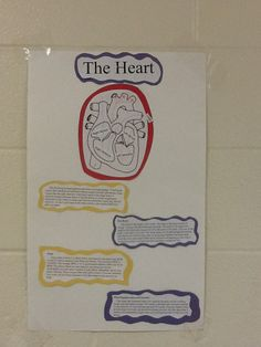 Heart Function Posters!
