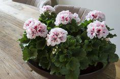 Outside Living, Landscape Art, Houseplants, Container Gardening, Healthy Lifestyle, Indoor, Flowers, Devon, Garden Plants