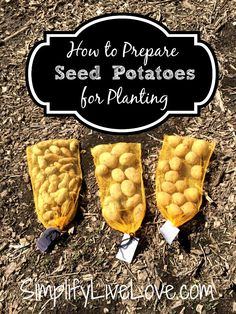 How to prepare seed potatoes for planting
