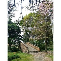ARMONÍA  Puente de la Custodia  Popayán Cauca Colombia. Por @elianajimenezc @popayanco . . . #Popayán #Cauca #Colombia #PuentedelaCustodia #Guayacan #Arbol  #Arquitectura #architecture #Puente #Historico #Historia #PachaMama #ArcodeMedioPunto #Rustico