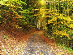 Path in autumn forest wallpaper