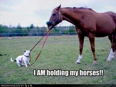 """Você sabia? Quando você quer dizer a alguém para ser paciente, esperar, acalmar-se, pode utilizar a expressão """"hold your horses""""."""