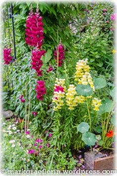 Garten Anfang Juni 11