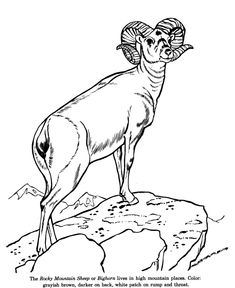wild animal coloring pages animal identification sheets learning animals