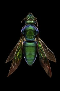 These AweInspiring Photos Show Just How Beautiful Insects Can Be is part of These Awe Inspiring Photos Show Just How Beautiful Insects Can Be - How the photographer captures these portraits is pretty impressive too Insect Photos, Cool Bugs, Insect Photography, Travel Photography, Bees And Wasps, Beautiful Bugs, Insect Art, Bugs And Insects, Creative Inspiration