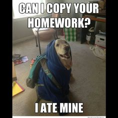 ... pic joke math meme haha funny humor <b>pun</b> lol <b>dog</b> homework ate copy