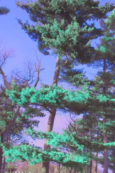 greenerie
